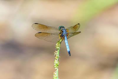 Photograph - Blue Dragonfly by Debra Martz
