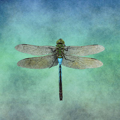 Photograph - Blue Dragonfly by Inspired Arts