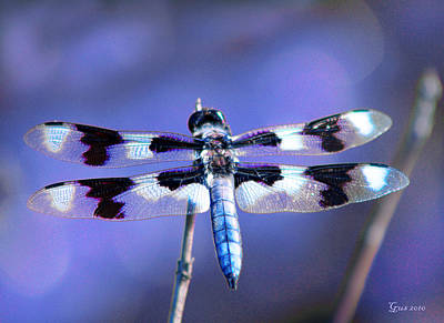 Blue Dragon Fly Photograph - Blue Dragonfly by Nick Gustafson