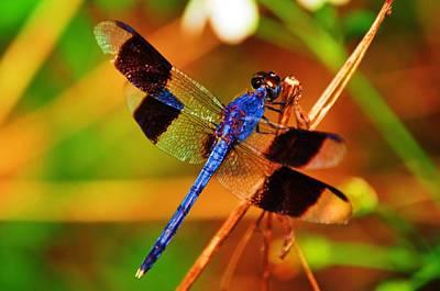 Blue Dragonfly Original