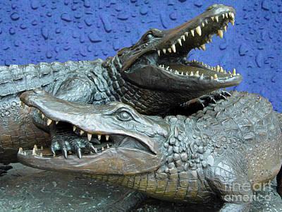 Photograph - Blue Dueling Gators  by D Hackett