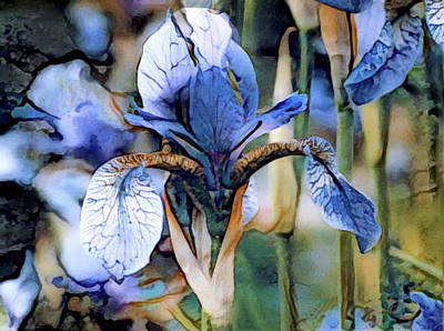 Photograph - Blue Dutch Iris by Susan Maxwell Schmidt