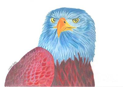 Yellow Beak Drawing - Blue Eagle by Isabel Proffit