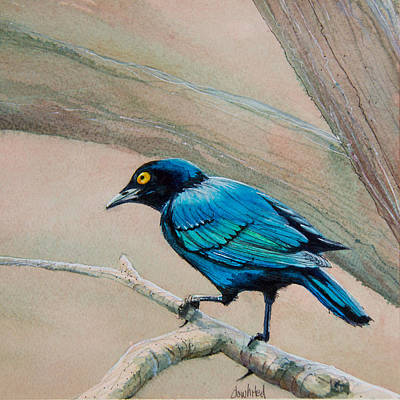 Starlings Painting - Blue-eared Starling by Dave Whited