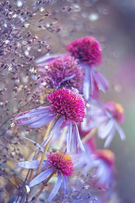 Artistic Photograph - Blue Echinacea  by Magda  Bognar