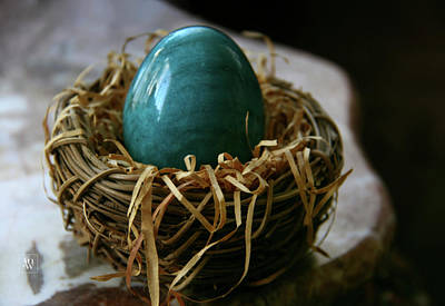 Photograph - Blue Egg Nesting by Yvonne Wright