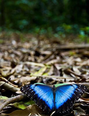 Photograph - Blue Emperor by Sarita Rampersad