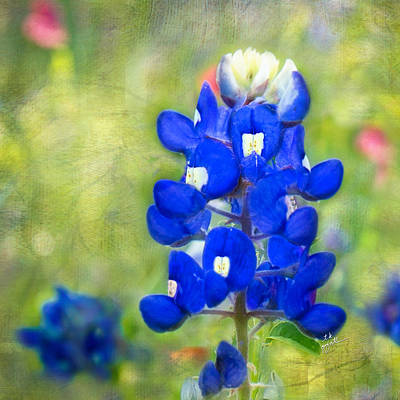 Photograph - Blue-est Of Blues Squared by TK Goforth
