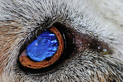 Miles Davis - Blue eye by William Le
