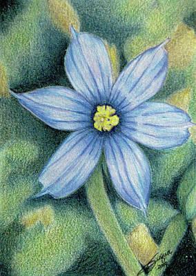 Fuqua - Artwork Drawing - Blue Eyed Grass - 1 by Beverly Fuqua
