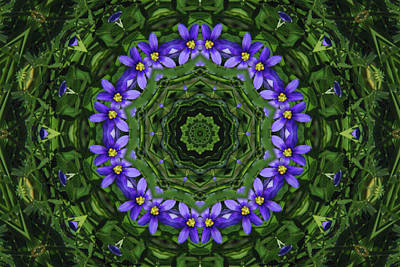 Photograph - Blue Eyed Grass Kaleidoscope by Robyn Stacey