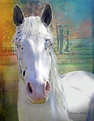 Photograph - Blue Eyed Horse by Bonnie Willis