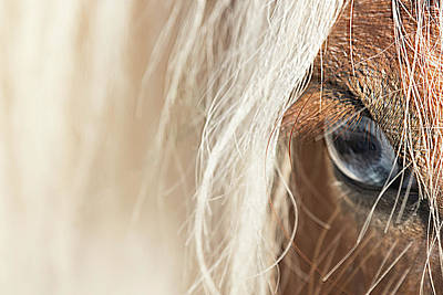 Photograph - Blue Eyed Horse by Kathryn Bell