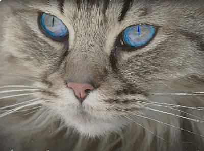 Painting - Blue-eyed Kitty - Painting by Ericamaxine Price
