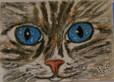 Blue Eyed Tiger Cat Art Print
