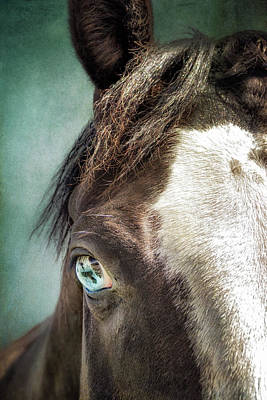 Photograph - Blue Eyes by Debby Herold