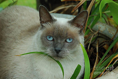 Photograph - Blue Eyes In The Garden by Kathi Shotwell
