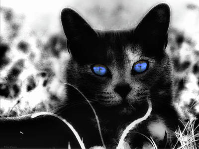 Photograph - Blue Eyes by Yvonne Emerson AKA RavenSoul