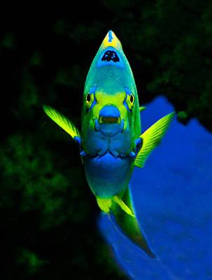 Photograph - Queen Angelfish Portrait by William Bitman