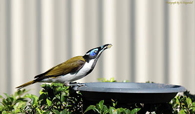 Digital Art - Blue-faced Honeyeater 01 by Kevin Chippindall