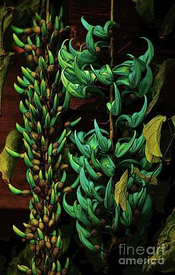 Photograph - Blue Jade Vine by Craig Wood