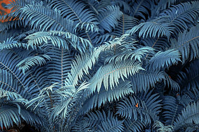 Photograph - Blue Fern Leaves Abstract. Nature In Alien Skin by Jenny Rainbow