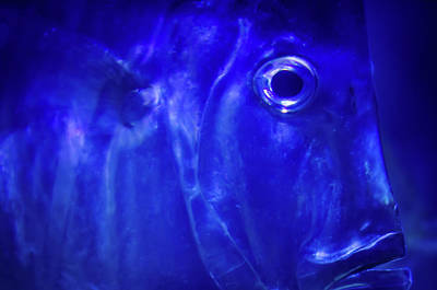 Photograph - Blue Fish by Jeff Phillippi