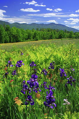 Photograph - Blue Flag Iris In The White Mountains by John Burk