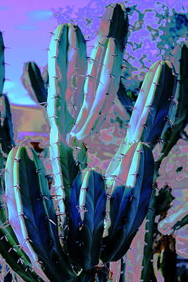 Photograph - Blue Flame Cactus Moonglow by M Diane Bonaparte