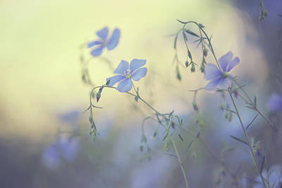 Photograph - Blue Flex Flower. Nostalgic by Jenny Rainbow
