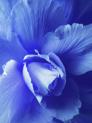 Blue Begonias Photograph - Blue Floral Begonia by Jennie Marie Schell