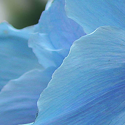 Photograph - 4 Of 9 Blue Flower, Butchart Gardens, Victoria Bc Canada Section by Michael Bessler