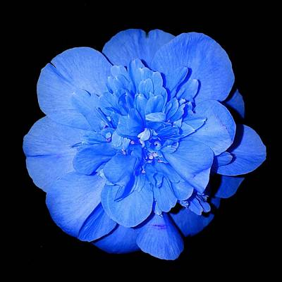 Photograph - Blue Flower by Colin Drysdale