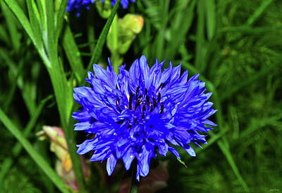 Photograph - Blue Flower In A Field 004 by George Bostian