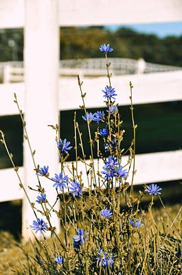 Photograph - Blue Wild Flower by JAMART Photography