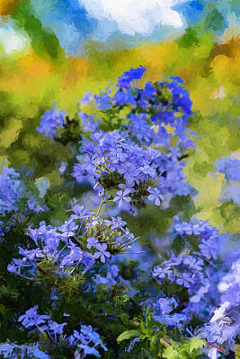 Photograph - Blue Flower Of October by SM Shahrokni