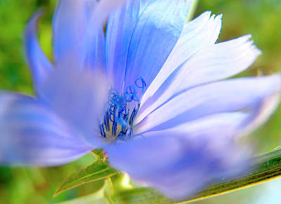 Sun Photograph - Blue Flower, Sun Light  by Nat Air Craft