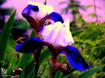 Blue Flowers Art Print by Aron Chervin