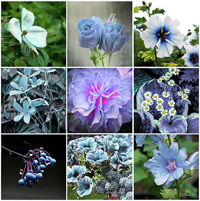 Photograph - Blue Flowers All by Bill Linn