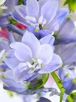 Blue Flowers Art Print by Alyona Firth