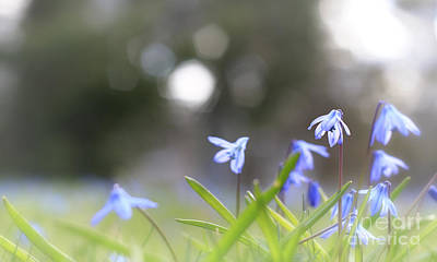 Photograph - Blue Flowers And Sunlight by Charline Xia