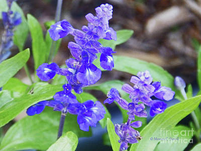 Photograph - Blue Flowers B4 by Monica C Stovall
