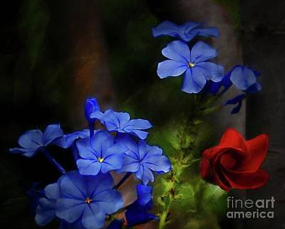 Photograph - Blue Flowers Growing Up The Apple Tree by John Kolenberg