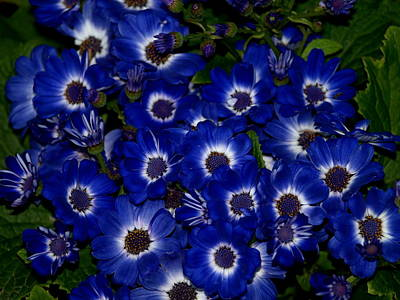 Blue Flowers Art Print by Laura Allenby