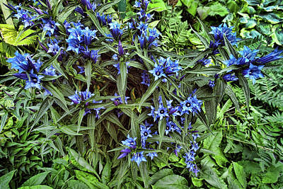 Photograph - Blue Flowers by Lawrence Christopher