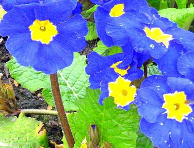April Shower Photograph - Blue Flowers by Mindy Newman