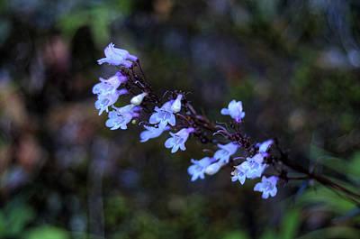 Digital Art - Blue Flowers by Patrick Groleau