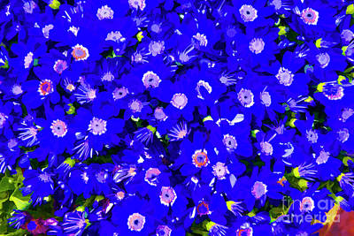 Photograph - Blue Flowers by Rick Bragan
