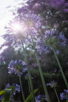 Photograph - Blue Flowers by Taylor Moore