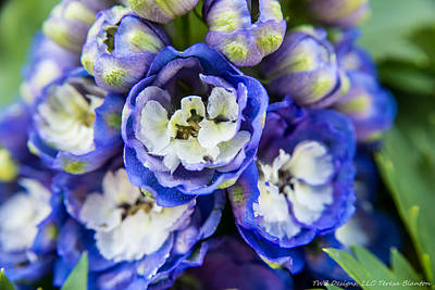 Photograph - Blue Flowers by Teresa Blanton